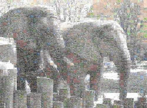 Two elephants at the Chicago Brookfield Zoo photo by Rick Miklos